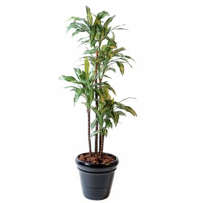 Dracaena artificiel FRAGRANS *4