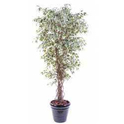 Ficus artificial LIANAS PF