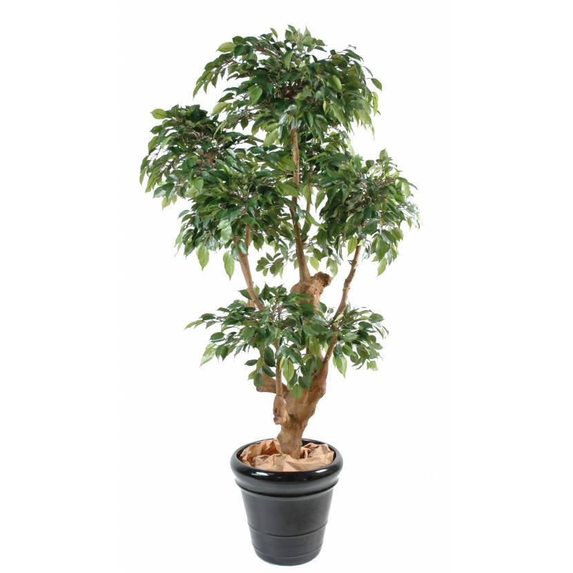 Ficus artificiel natasja 5 tetes for Ficus artificiel