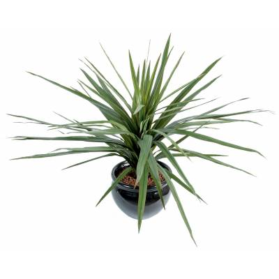 Dracaena artificiel MARGINATA 58F