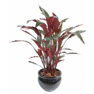 Calathea artificial POTTED