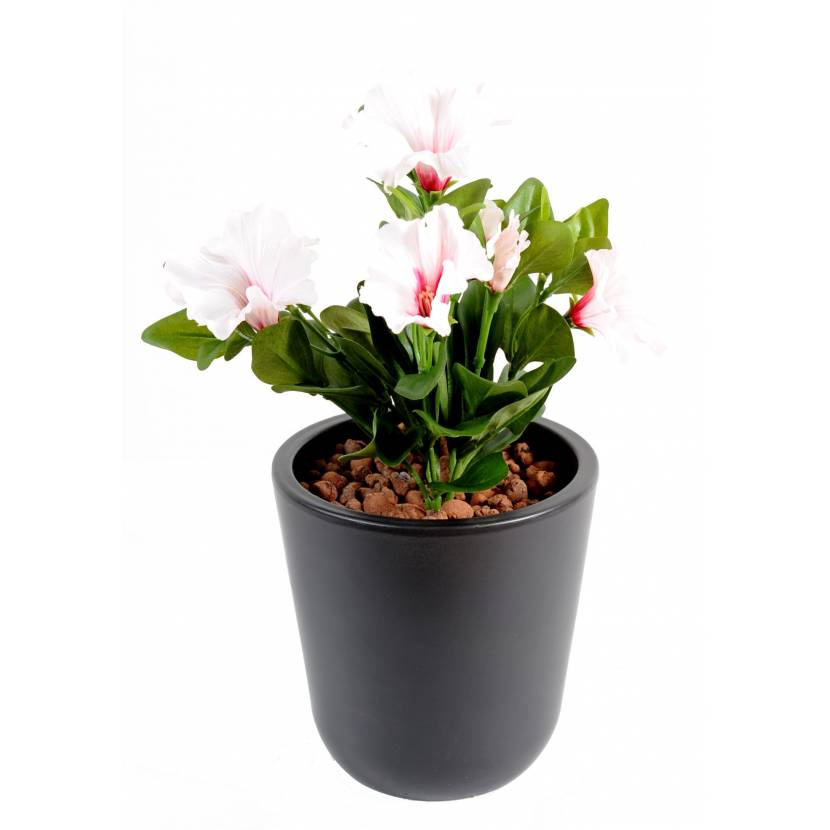 Petunia artificial *7