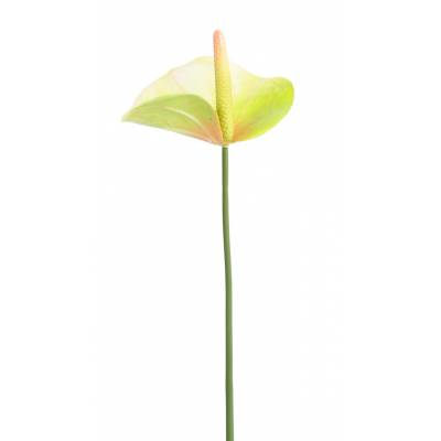 Anthurium artificiel mini