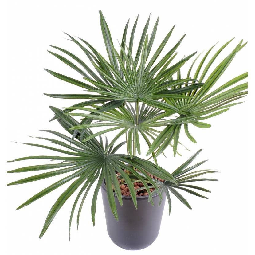 Palm Tree Artificial BABY