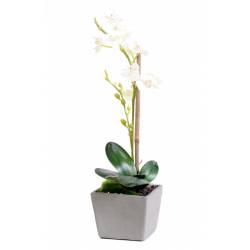 Phalaenopsis artificial POT