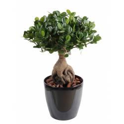 Ficus artificiel PANDA GINSENG