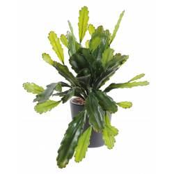 Epiphyllum artificiel LARGE PLASTIQUE