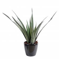 Aloe artificielle ferox plastique