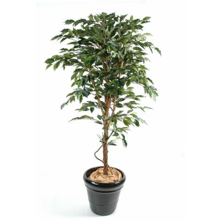 Ficus artificial tree TRUNK MERE GF