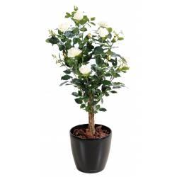 Glycine pot 28 images standard wisteria sinensis tree for Jardin royal niort