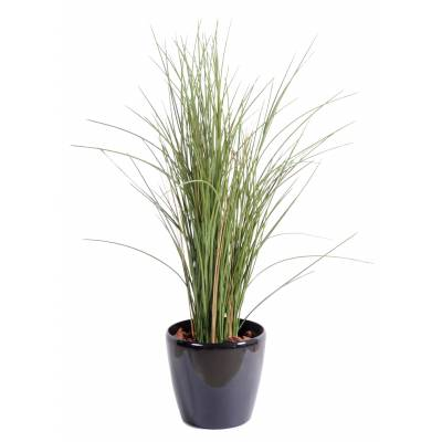 Herbe artificielle HONEY GRASS