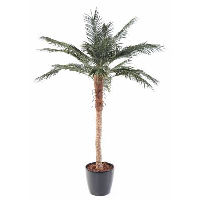 Phoenix artificiel PALM