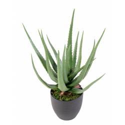 Aloe artificial