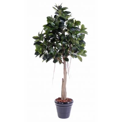 Rubbert plant tree artificial