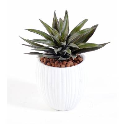 Succulent artificiel en pot capi
