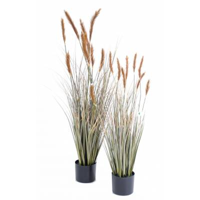 Foxtail artificial GF