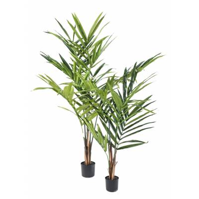 Kentia Artificial