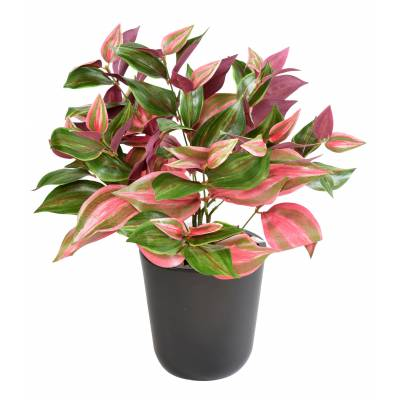 TRADESCANTIA artificiel PIQUET