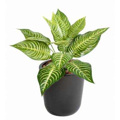 APHELANDRA Artificial MINI