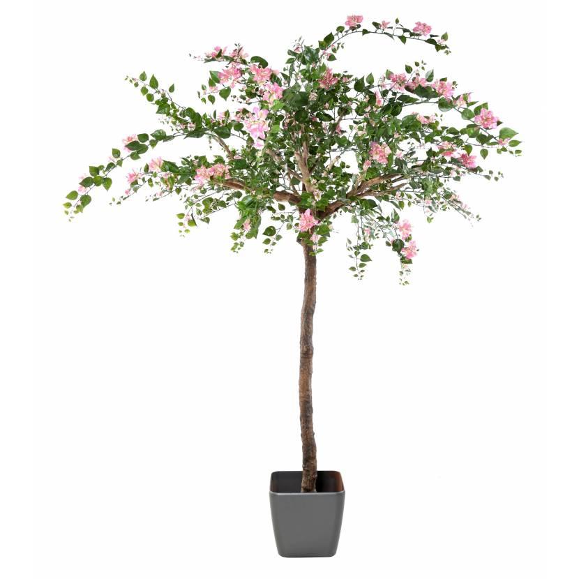 BOUGAINVILLEE TREE