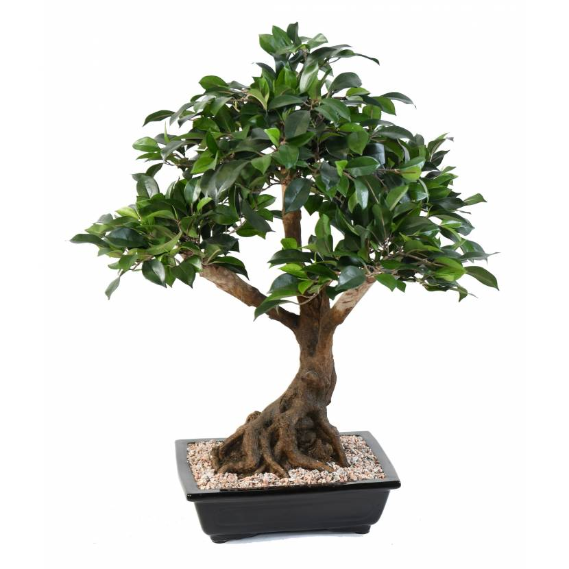 Bonsai artificiel ficus en coupe for Ficus artificiel