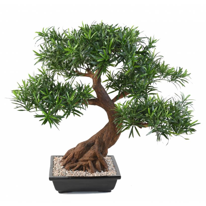 bonsai artificiel podocarpus en coupe. Black Bedroom Furniture Sets. Home Design Ideas