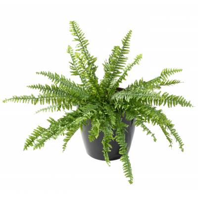 FERN Artificial BOSTON LUXURY