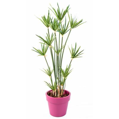 PAPYRUS artificial POTTED GREEN BASIC TOP PLANT