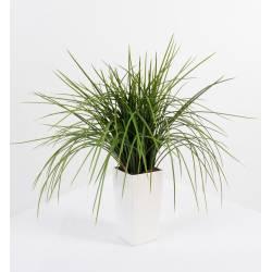 Artificial grass ONION GRASS KUBIS