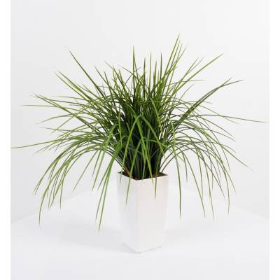 Herbe artificielle ONION GRASS EN KUBIS