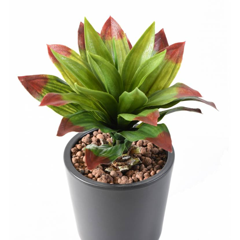 AGAVE artificial 22