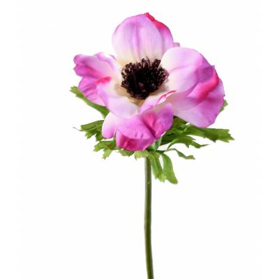 ANEMONE artificielle