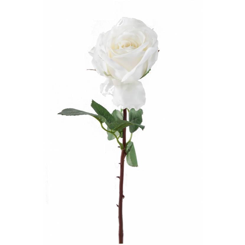 ROSE OLIVE
