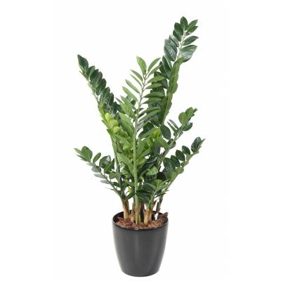 Zamia artificial 110