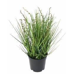 Berry Onion Grass artificiel