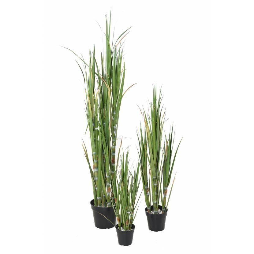 Canne sucre artificielle - Pot pour bambou exterieur ...