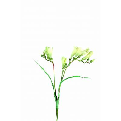 Freesia artificial