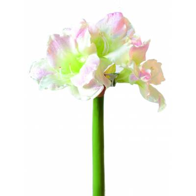 Amaryllis artificial stem 3f