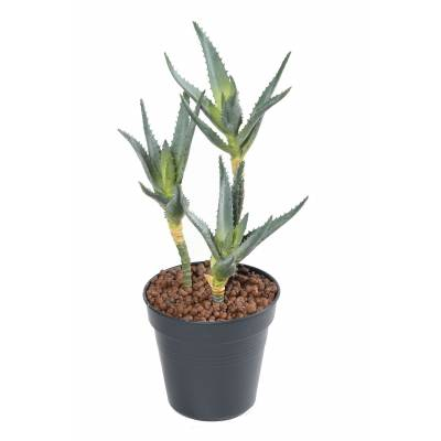 ALOE 35 Artificial