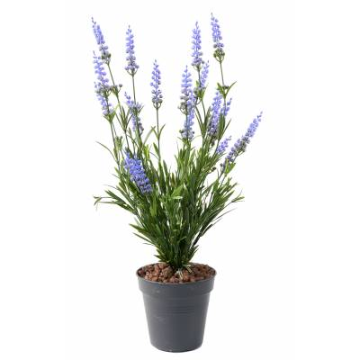 Lavender Artificial