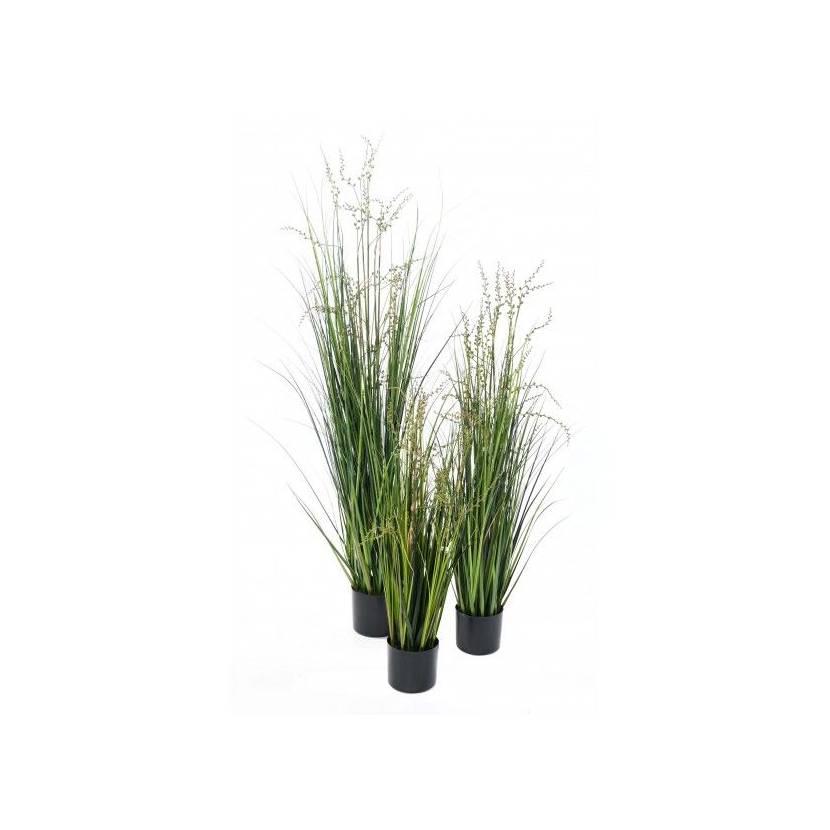 BERRY ONION GRASS 35