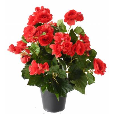 Begonia artificiel*93