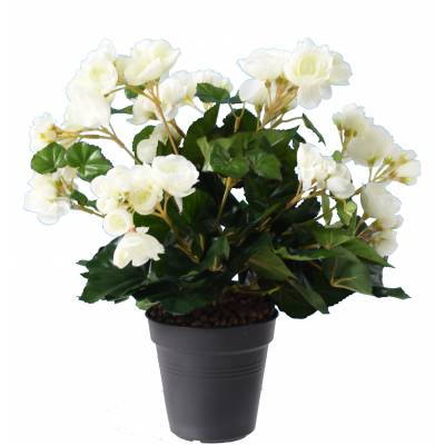 Begonia artificiel*94