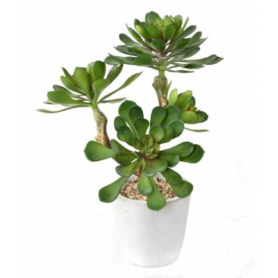 SUCCULENT Artificial POTTED 30