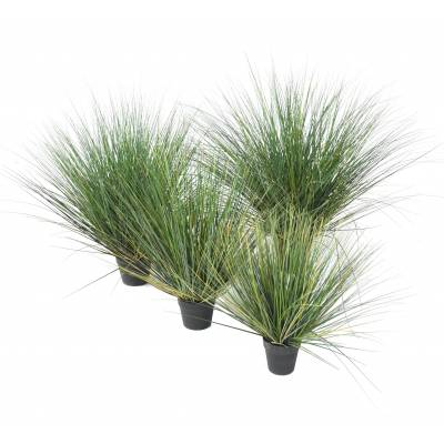 ONION GRASS Artificial NEW ROUND