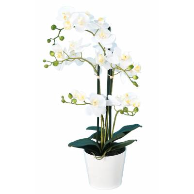 PHALAENOPSIS Artificielle POT*5