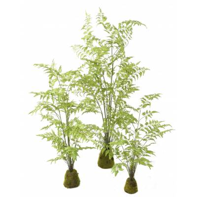FERN Artificial