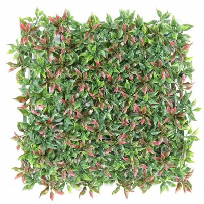 RUSCUS PLATE