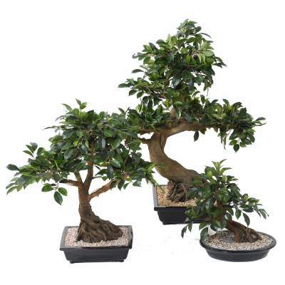 Bonsai artificiel FICUS EN COUPE