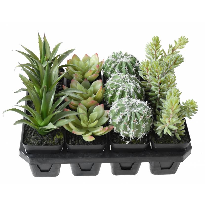 SUCCULENT WITH 12 (sold by 12)
